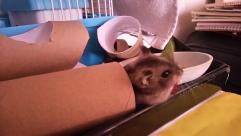 my daughter, 小米